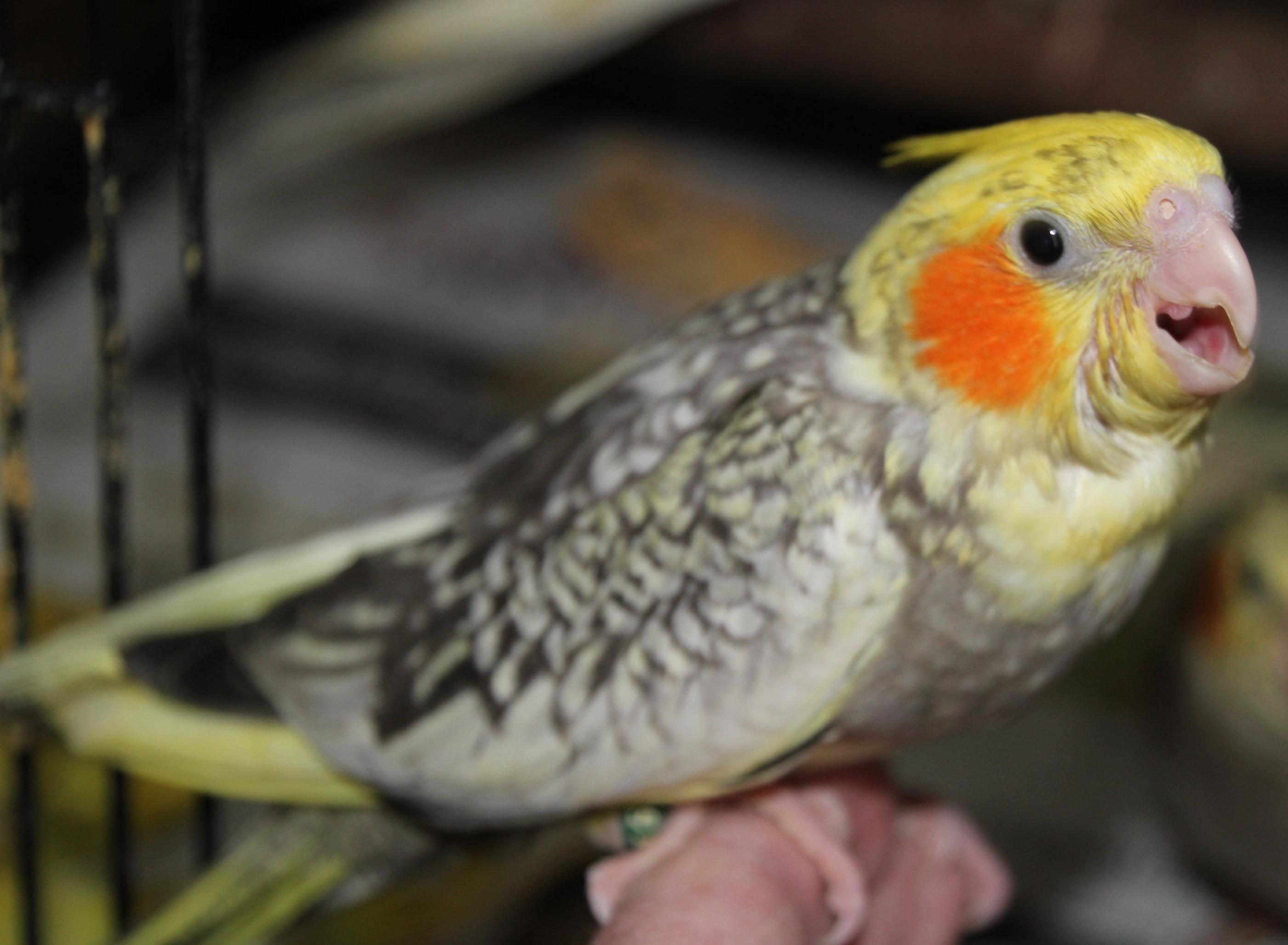 HomePage [parrotsrok.com]